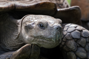 zaščita želv